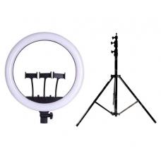 Набор: Кольцевая светодиодная лампа с 3-мя держателями M18S (45 см.) LED Soft Ring Light + Штатив 210 см. (white)